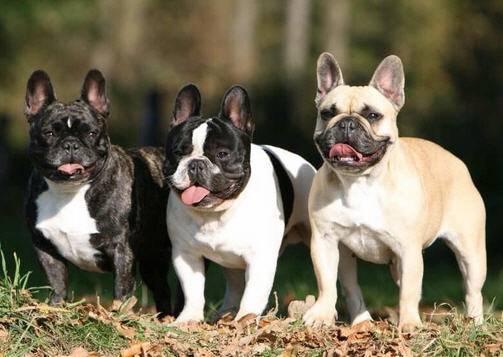 Сочи форум собаки из ризинок - fdb6c