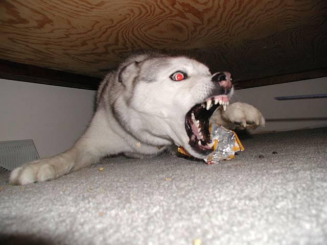 Бешенство у собак как лечить в домашних условиях