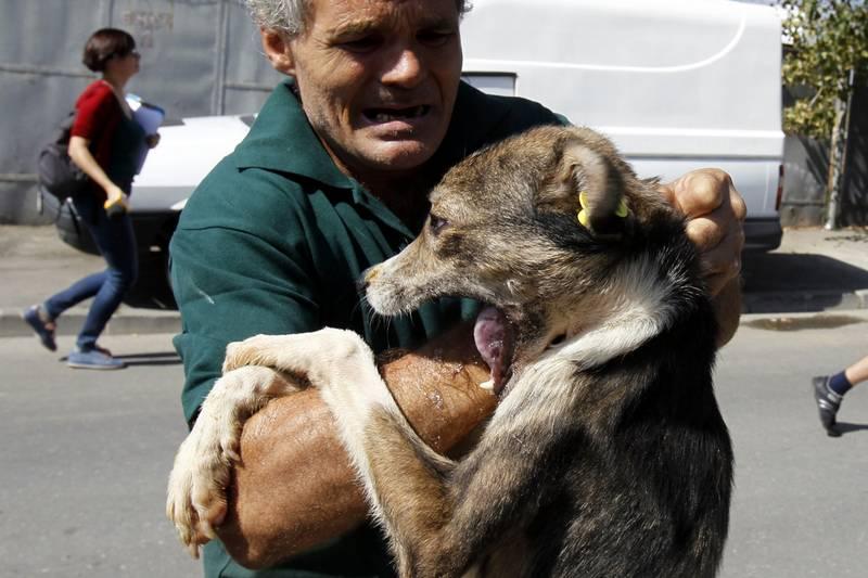 Собака покусала другую собаку ответственность сущности