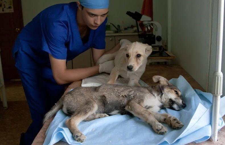 энтероколит у собак симптомы и лечение такое белье изготовлено